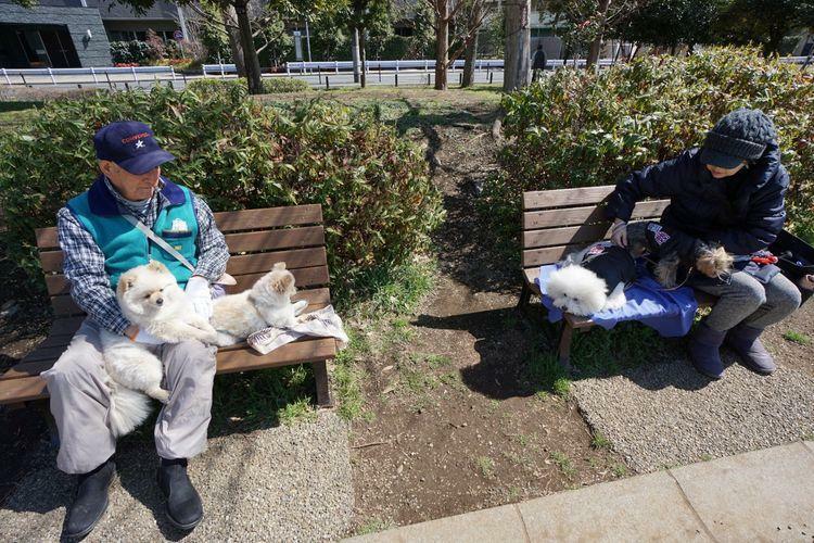 公園 桃井はらっぱ広場 少し足を延ばして「桃井原っぱ広場」へのお散歩もオススメです。