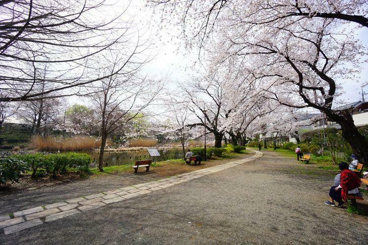 公園 約80000平米の広大な敷地の「善福寺公園」は武蔵野市三大湧水池の一つとなっておりペットの入園も可能で午前中はお散歩や保育園児達でにぎわっています。