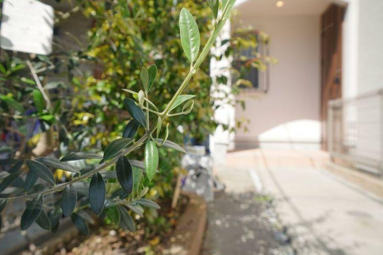 現況写真 美しい植栽が建物の良さを引き立たせます。ガーデニングが趣味でしたら好きなお花を植えても楽しそうです!