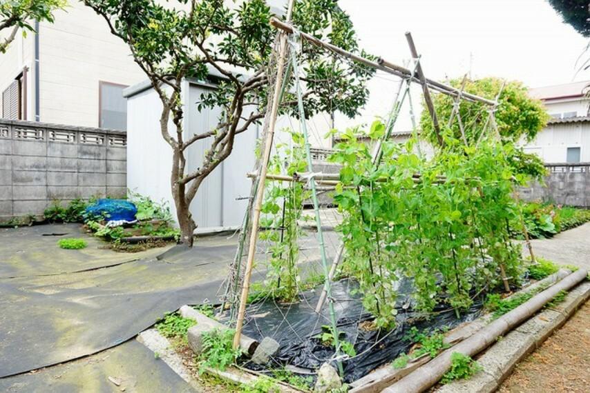 庭 敷地面積が100坪以上あるので、ガーデニングや家庭菜園が楽しめそうですね。