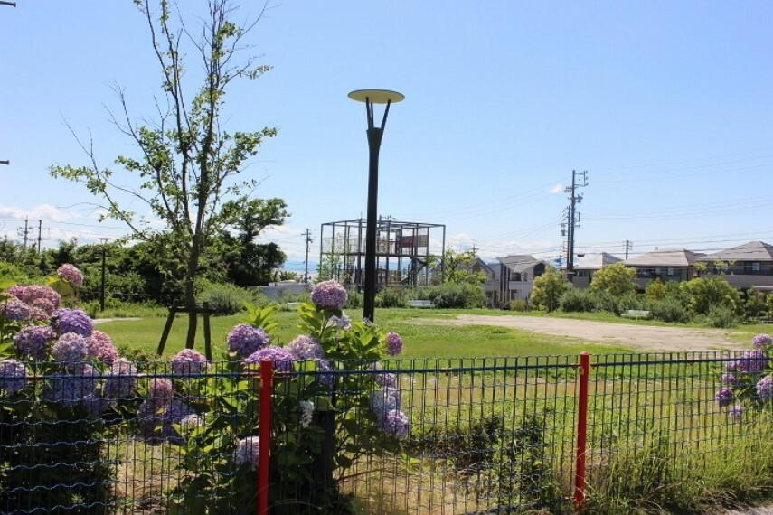 公園 ふかま公園