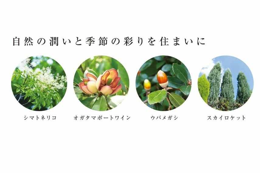 庭 自然の潤いと季節の彩りを住まいに  シマトネリコ/オガタマポートワイン/ウバメガシ/スカイロケット