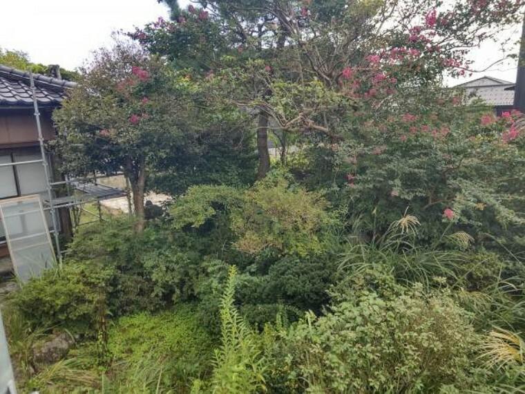 庭 【リフォーム中】裏庭です。物置撤去、鬱蒼と生えた庭木・庭石は一部撤去、伸びきった庭木は枝を落として整える予定をしております。