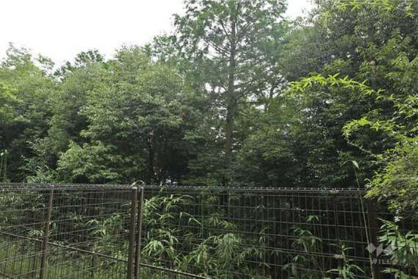 眺望 庭すぐ横にマンションの植栽があります。家の中からでも緑を感じることのできる、自然豊かな住環境です。