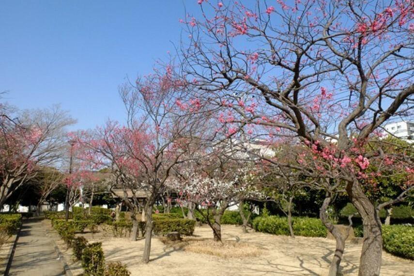 公園 円行公園 遊具エリアの外側には桜並木が続いていて春になると美しい光景が広がります。地元のお花見の名スポットになっています