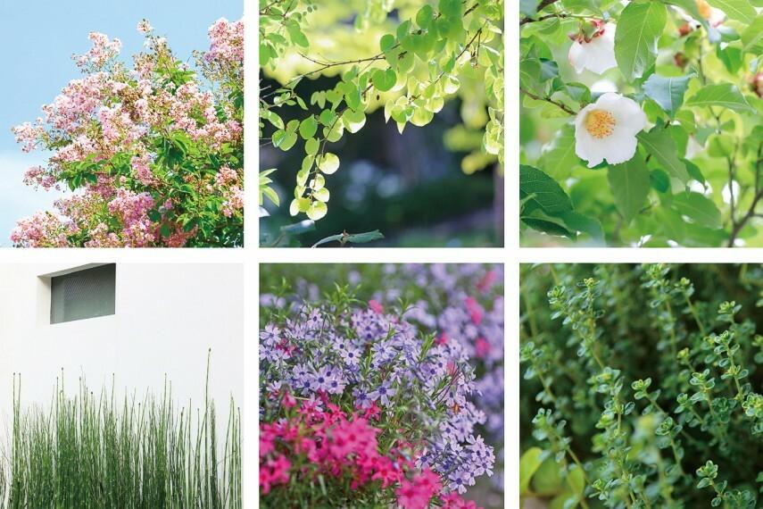 庭 【季節を感じる植栽】  豊かな緑を湛えるシンボルツリーをはじめ、四季を演じる多彩な木々や花々を植えることで、周辺の緑とつながる景観を創出します。