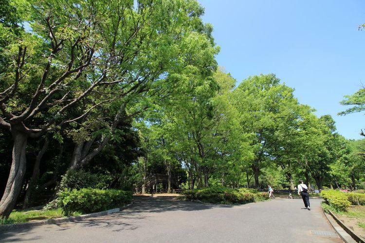 公園 世田谷公園 徒歩10分。