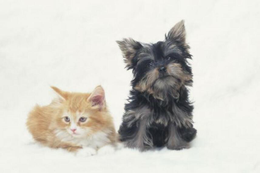 ペット飼育相談可能なマンションです。原則は小型犬、その他犬・猫は条件付きで可能になることもございます。詳細は担当者にご相談くださいませ。