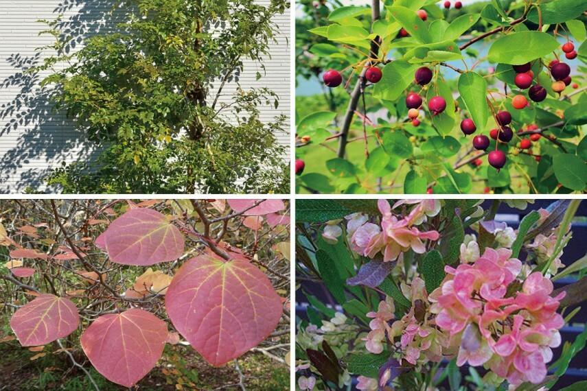 庭 【街を鮮やかに彩る植栽計画】  街には様々な木々を植え、瑞々しい色合いで彩ります。季節の移ろいを心地よく感じる暮らしを演出します。※号棟により異なります。※写真はイメージです。