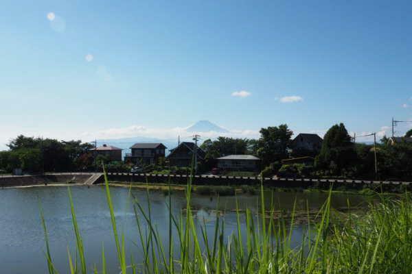 現況写真 池の奥には富士山が望めます