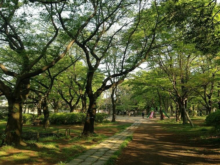 公園 善福寺公園