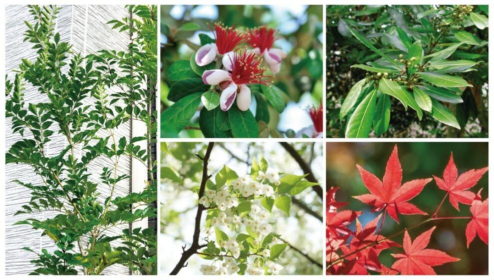 庭 【四季を彩る植栽】  四季折々の表情を魅せてくれる立ち木や下草を植栽しました。住まう人だけでなく道行く人の目を引くとともに、景観を美しく彩ります。