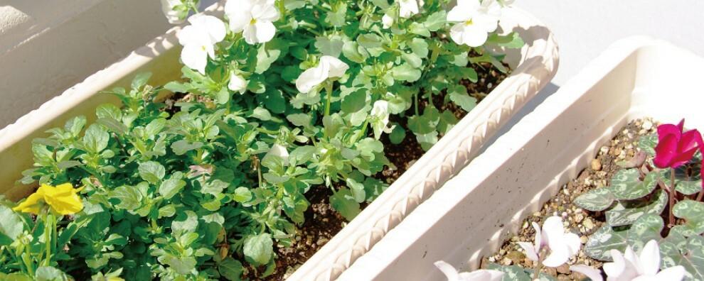 バルコニー 【バルコニー & 水栓】  水栓付きでガーデニングも気軽にできるバルコニー。テレワークの息抜きに、植物に囲まれる癒やしひとときを味わえます。