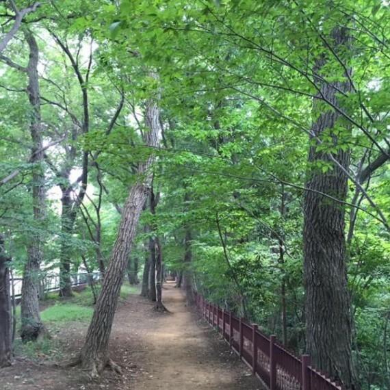 公園 玉川上水緑道
