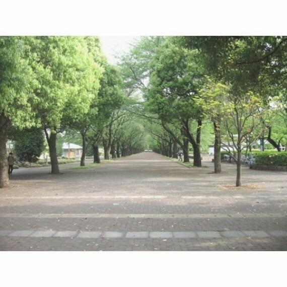 公園 府中の森公園