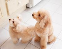 ペット同居可能・ペット足洗い場設置